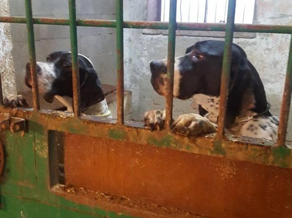 La Pensione Per Cani Degli Orrori 31 Cuccioli Denutriti Due Morti
