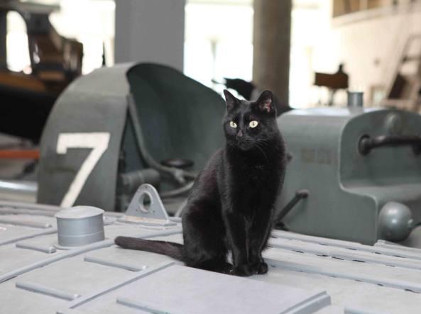 La gatta Enrica sul sottomarino Toti, al Museo della Scienza e della Tecnologia di Milano (foto Vaglia)