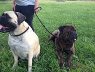 Malnate, escrementi dei cani non raccolti: i padroni incastrati dal dna