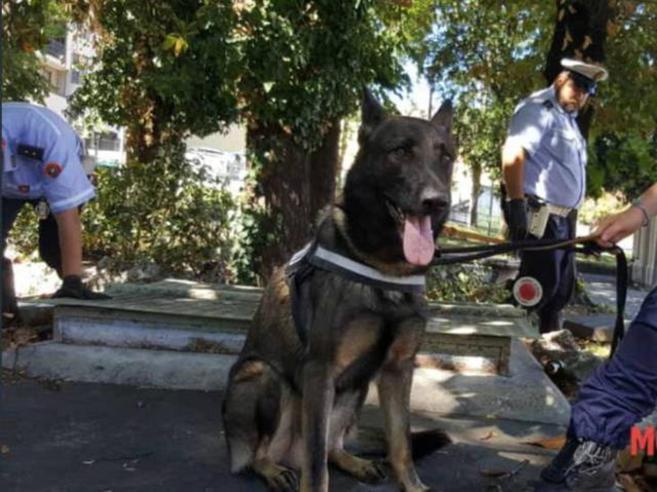«Narco della X Mas»:il cane poliziotto che è accusato di