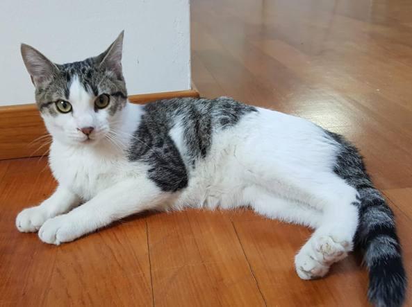 livorno, 88enne muore dissanguata per i graffi del suo gatto