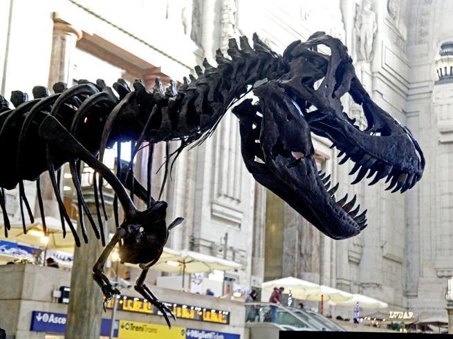 Il Tyrannosaurus Rex più grande al mondo esposto alla stazione Centrale di Milano