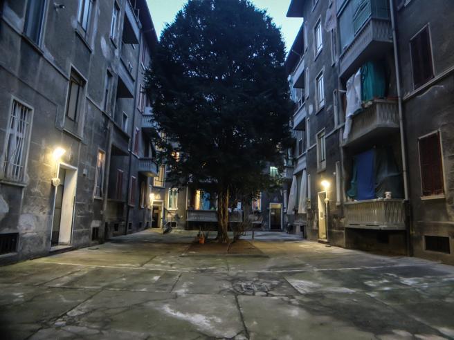 Milano, il b&b e la serra di marijuana nelle case (occupate) dell ...
