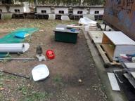 Bareggio, il raid dei vandali nella colonia felina: due micini uccisi a bastonate