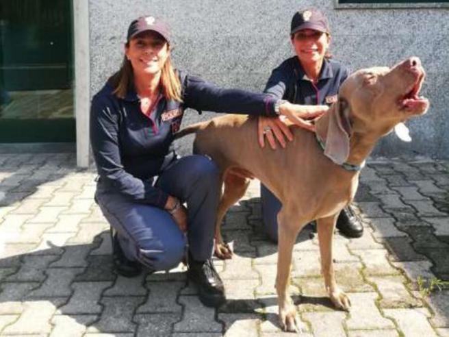 La storia del cane Wisi:  rapito  a Torino, è stato  ritrovato a Milano