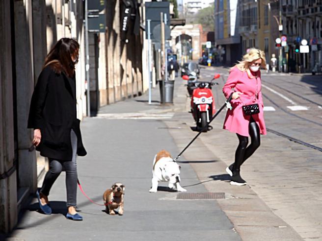 Coronavirus, volontari Leidaa in aiuto per salvare cani, gatti e piccioni: «Duemila gli interventi»