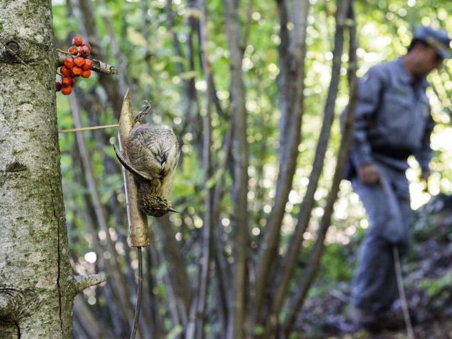 Lombardia «base» dei bracconieri: ogni anno uccisi 2 milioni di uccelli