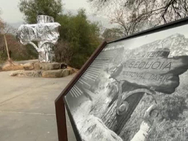 Usa, teli ignifughi per proteggere dal fuoco gli alberi al Sequoia National Park
