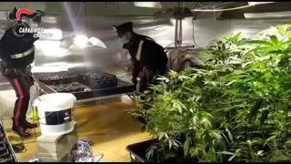 Crema, un'enorme serra di marijuana nascosta in un box: le perquisizioni